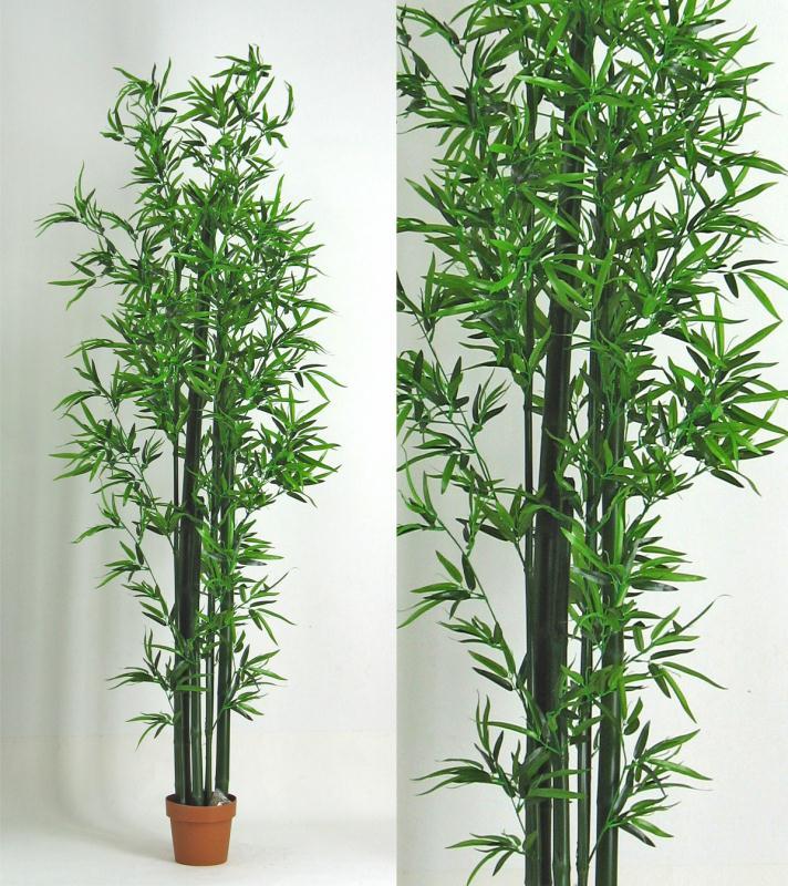 Bamboo bambu 225cm lvroses for Bambu in vaso prezzo