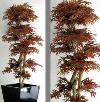 Piante alto fusto lvroses for Acero rosso canadese prezzo