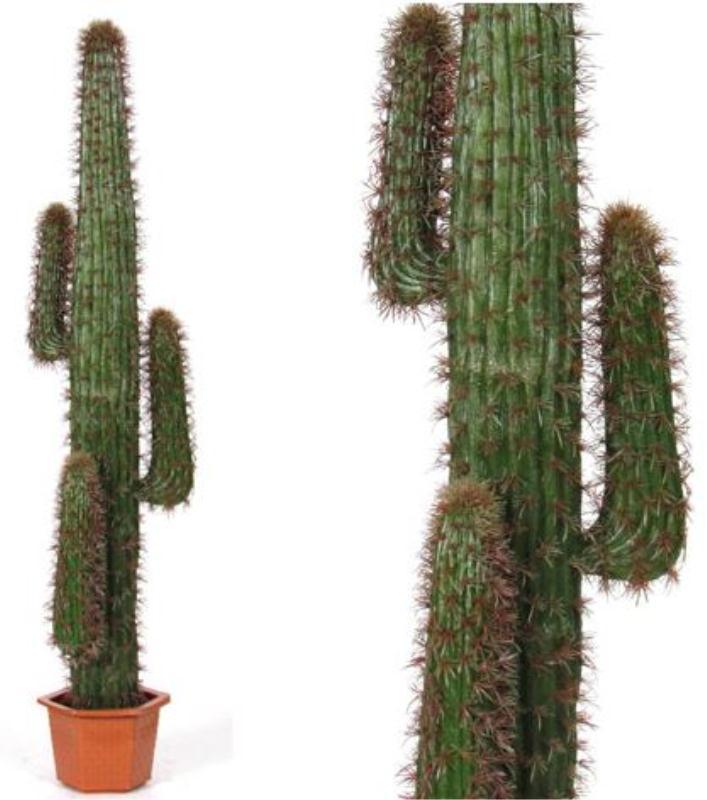 Cactus saguaro 170cm lvroses for Pianta cactus